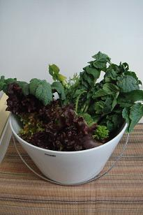 お洒落な野菜たち2.jpg